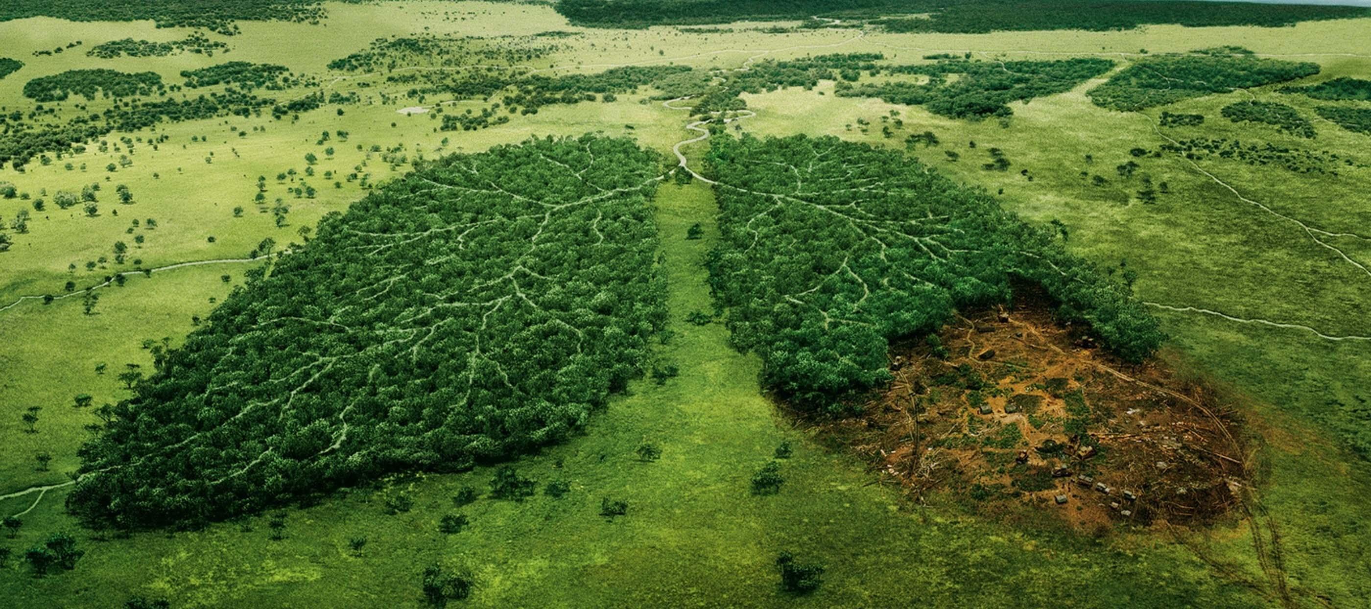 ekologichnoї_politiki_v_ukraїni_nema_1.jpg