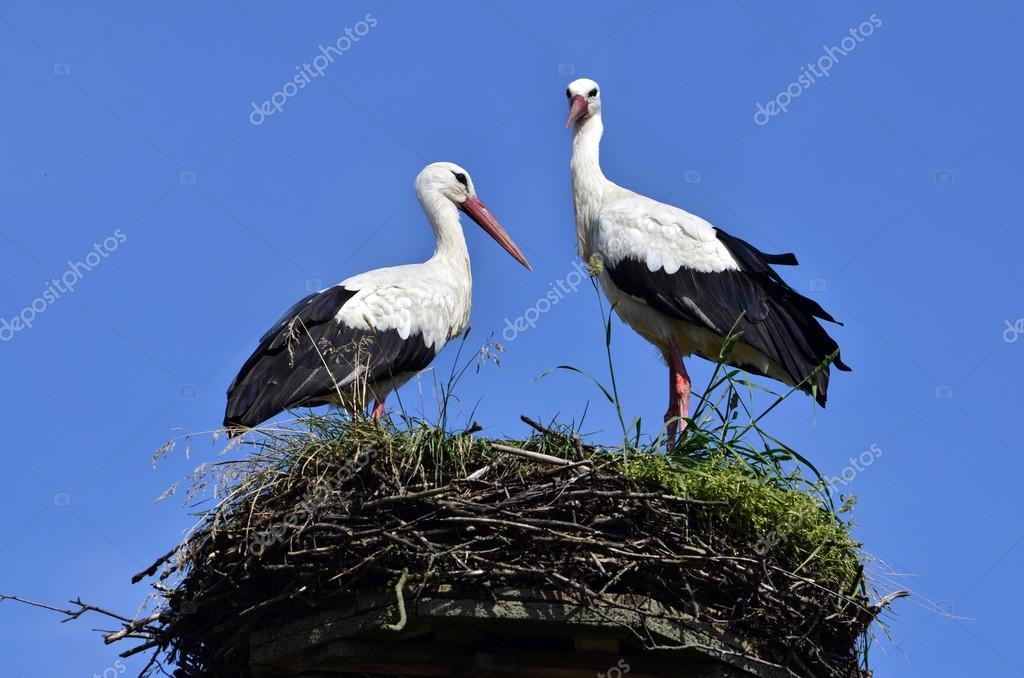 depositphotos_29758029-stock-photo-storks-in-the-nest.jpg